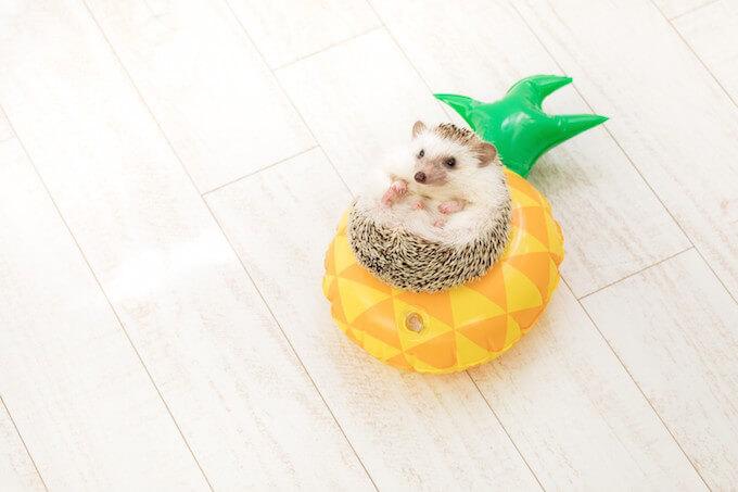 ハリネズミとパイナップル