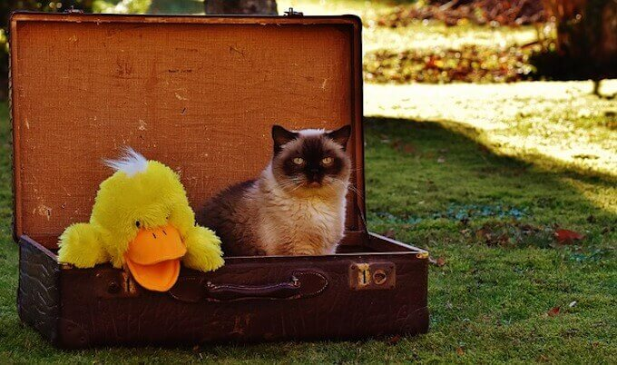 猫とアヒル