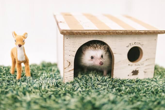 ハリネズミと家