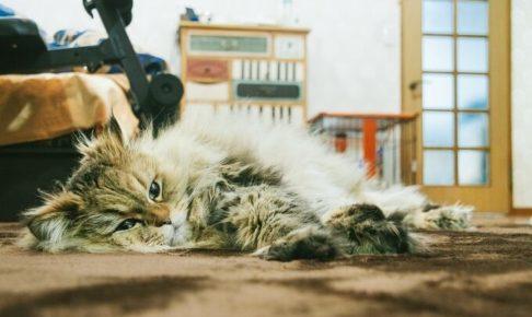 やる気ない猫